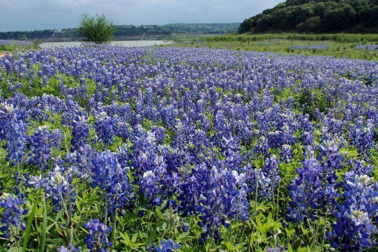 Hill Country, Texas (via U.S. 281)
