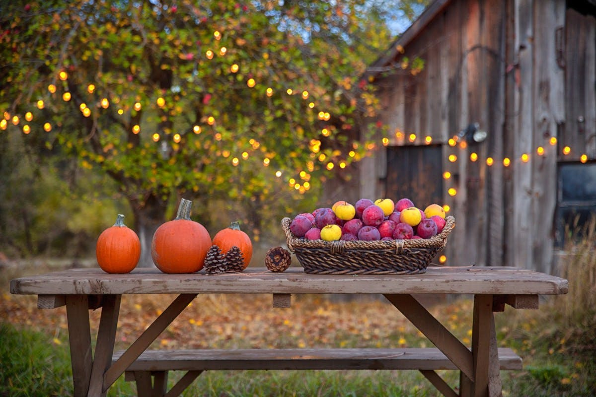 Airstream Thanksgiving pumpkins country scene trees and lighting