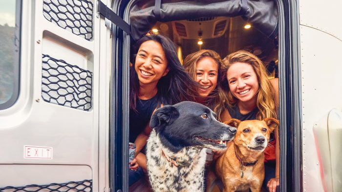 Airstream Basecamp Pets Travel