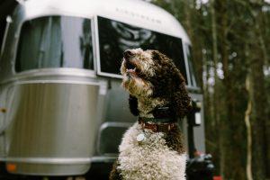 Puppy - Airstream Ambassadors