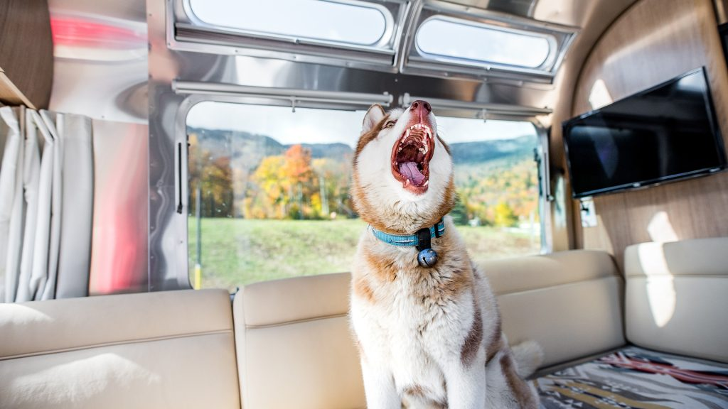 Husky in Airstream Camper Trailer