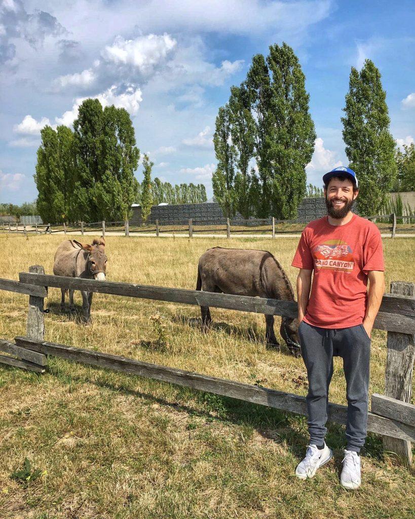 Donkeys - Tierschutz Berlin