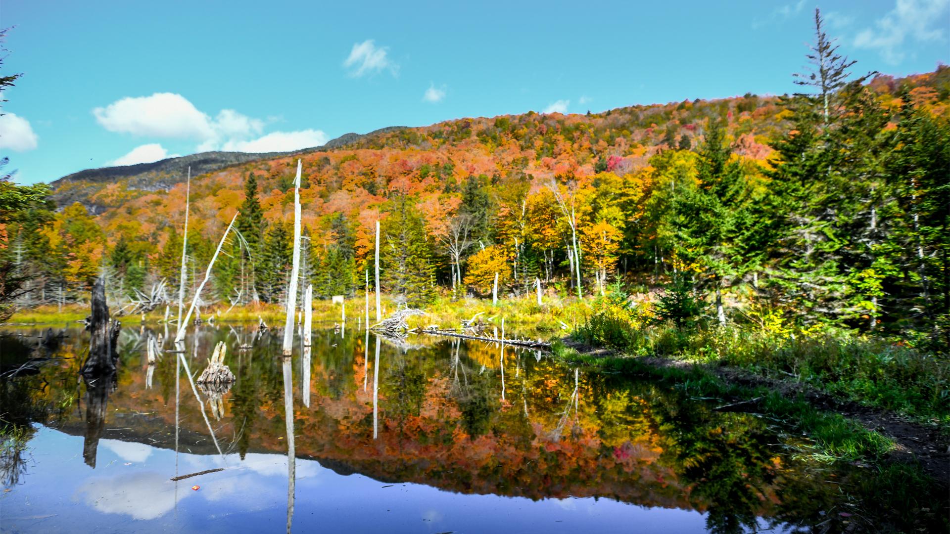 Fall-Imagery